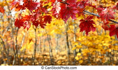 Colors of Autumn - Beautiful view of the autumn forest