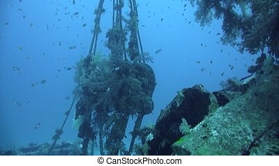 Divers visiting the wreck Giannis D, Red Sea, Sharm el...