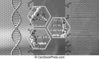 DNA molecules gray motion background. Genetic research,...