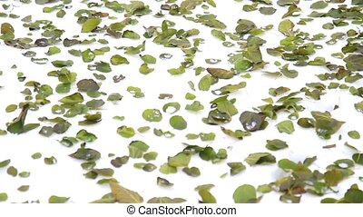 green leaves lying on the snow