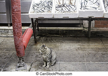 Store cat fish - Cat in Fish shop, food and industry
