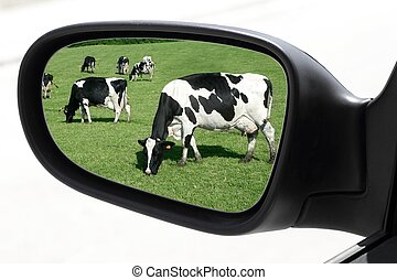 rearview car driving mirror view meadow cow - rearview car...