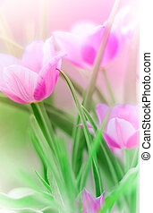 Close-up pf pink tulips in a bunch