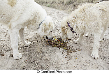 Dogs eating together in field, nature