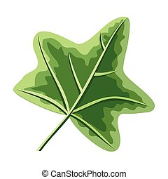 Ivy Green Leaf Isolated on White. Hedera or Ivies - Ivy...