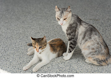 cat with her mom