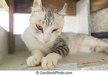 adorable domestic cat
