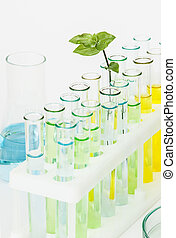 Sprout in vitro - Sprout with green leaves in vitro and...