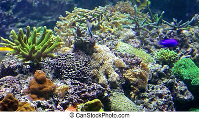 Colorful tropical fish in the sea - Colorful tropical fish...