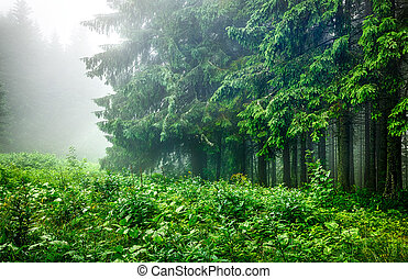 Landscape of forest edge with green branches fir-trees