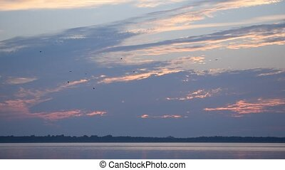 Many birds fly at dawn with colorful backlit clouds - Many...