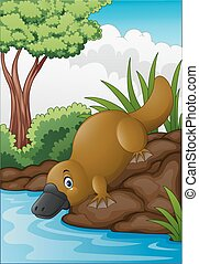 Cartoon platypus in forest creek - Vector illustration of...