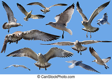 Seagulls isolated on blue background