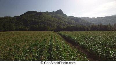 Aerial view of corn field in Montenegro