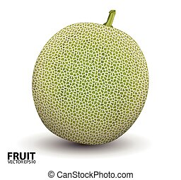 Realistic vector illustration of a melon or cantaloupe...