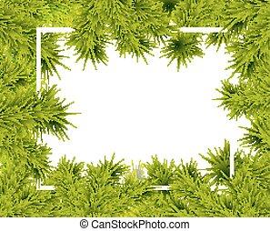 frame of fir branches