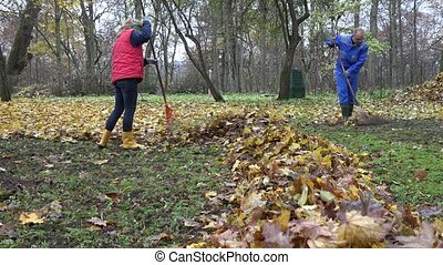 People rake leaves in autumnal park. Team work. 4K - People...