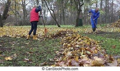 People rake leaves in autumnal park. Team work. 4K - People...