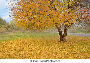 美しい, 秋, 孤独, 木