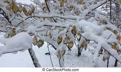 Branch with yellow leaves in the snow, day