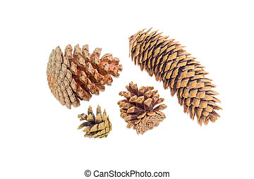 Several conifer cones of various coniferous trees on light...