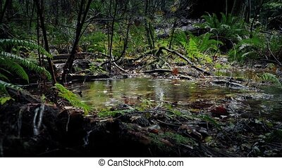 Heavy Rainfall On Pool In The Woods - Shallow woodland pool...