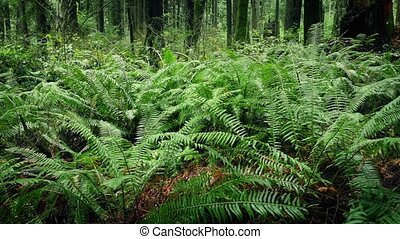 Moving Past Ferns In Verdant Forest - Dolly shot moving...