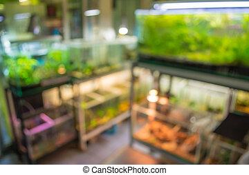blur image of aquarium shop. - blur image of aquarium shop...