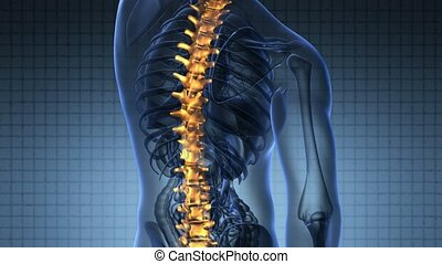 backbone. backache. science anatomy scan of human spine...