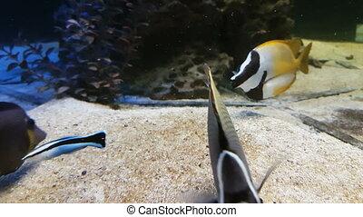 Beautiful fish in decorated Marine Aquarium stock footage...