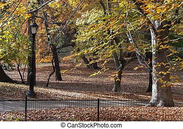 Bike path among autumn trees on Central Park, New York -...