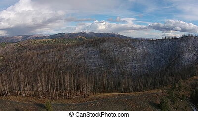Burned Trees Sawtooth National Forest Aerial - Idaho...