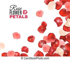 Rose Flower Petals Background