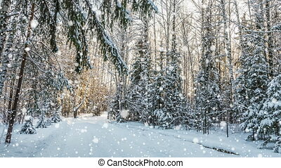 Falling snow in the winter forest, CINEMAGRAPH, loop, 1080p...