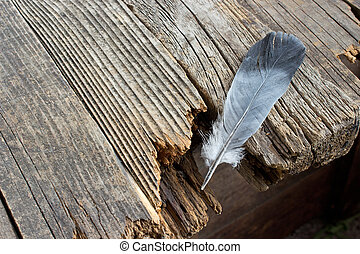 Black feather on old woode