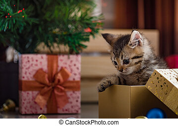 Cute kitten in christmas. - Close up of cute brown tabby...