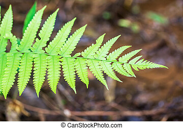 Close up of Fern in the forest