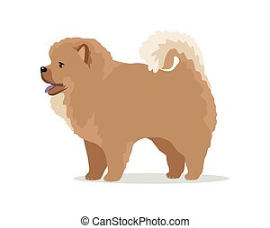 Chow-Chow Dog Breed Vector Flat Design Illustration -...