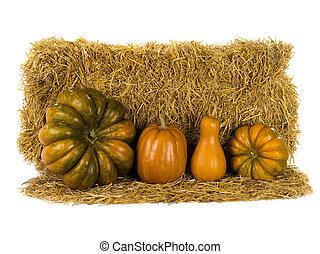 still life pumpkin
