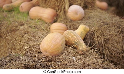 Large and mini pumpkins on straw decoration at local barn....
