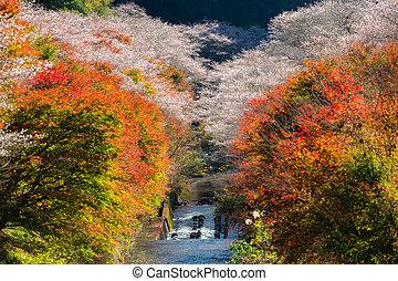 Nagoya, Obara Sakura in autumn - Nagoya, Obara. Autumn...
