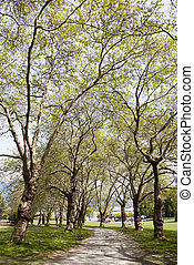 Stanley Park Pathway - The view of Stanley park in Spring...