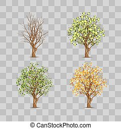 Isolated set of trees in different seasons
