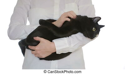 businesswoman holding a cat in her arms - businesswoman...