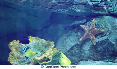 Aquarium with a large amount of tropical fish large and...