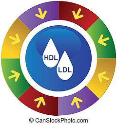 HDL, LDL, colesterol