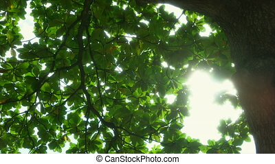 Sun breaking through the green leaves.