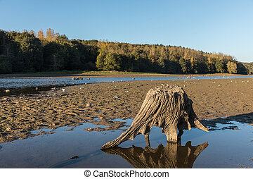 Tree stump at the lake of jaunay (Vendee, France)