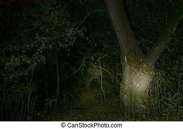 """Haunted forest at night - """"Island of Witch""""..."""