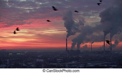 Birds fly on background of industrial cityscape